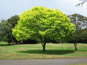 albero ptatura corretta