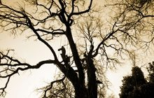 importanza-alberi