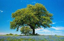 alberi-alto-fusto