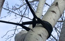 consolidamento-albero